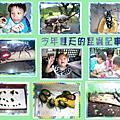 今年夏天的昆蟲記事簿