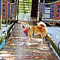 妖怪創界-糖狗村