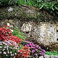 20''0327。大鋤花間咖啡生態農場 Dachu Coffee Estate