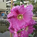 護城河及花市花卉103.2.5