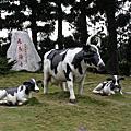 2010.12.26台南之旅~走馬瀨農場(二)