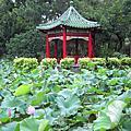 2010.6.2台北植物園賞荷
