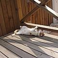 貓咪生活*v*咪嗚~