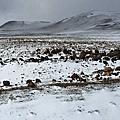 2015/2/17 摩洛哥:菲斯-伊芙蘭(下雪)