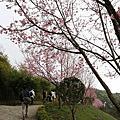 2017/3/12 苗栗  妙音淨苑:櫻花
