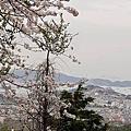 2018/4/5 釜山  鎮海:長福山公園