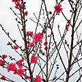 2013-0213~16-新春之旅阿肥的天空農場露營篇