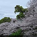 2016日本山陽紀州