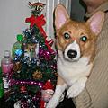 2008年嘟嘟的第一個聖誕節