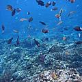 2012.5.26 綠島海上長泳