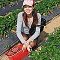 2011.02.07 大湖採草莓