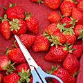2010.03.06大湖草莓