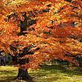 2013秋。日本。京都、大阪