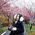 2011春。武陵