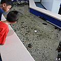 105.08.30台東小丑魚主題館