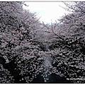 北鼻遊東京