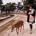 櫻滿開的宮島與鹿