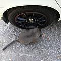 201107台南烏山獼猴保護區