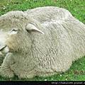 可愛的小綿羊