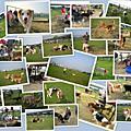 2009兒童節在迎風狗動物公園
