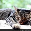20120729台北候硐貓咪
