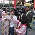 2009 寵物嘉年華