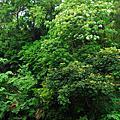 090419 銅鏡山林步道