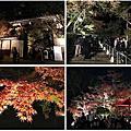 2016京都賞楓之旅