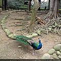 玩樂---新竹動物園