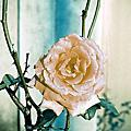 minolta-捨棄的玫瑰