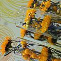 台灣花卉博覽會day-2