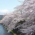 20110409 京都御苑--鴨川花見