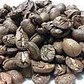 咖啡豆資料