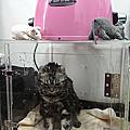 鴻鷹寵物烘毛箱