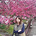 2012.02.17 九族櫻花(二)