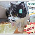 2012/11/21點點蛋糕賊.御貓奴小芳生日