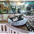 【御貓坊】住宿客貓-加菲&小不點