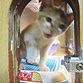 【紅茶】來御貓坊的第一天(已經被認養囉)