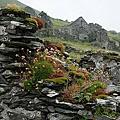 弟的愛爾蘭英倫之旅part1
