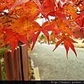 京都地圖:紅葉狩