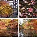 關西賞楓  神戶森林植物園 書寫山