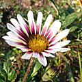 台北植物園_20061223