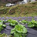 至幼總是生活梯田山坡上,堅持無毒種植高山蔬菜的我們...堅持是為健康