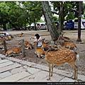 (日本)奈良公園、東大寺
