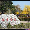 台中-黃花風鈴木
