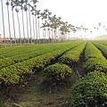 20121216-3 南投八卦山微光森林鳳梨酥