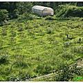 20140601-2 新竹北埔彩虹部落玫瑰園農場