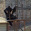 [中國] 2013年6月23日 北京 萬里長城 八達嶺 ( Badaling Great Wall ) 5/5