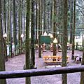20080210_馬武督探索森林(綠光森林)