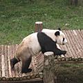 20081011_南京_紅山動物園